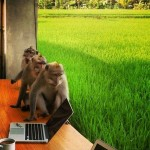 How I Am Building My Business From Bali