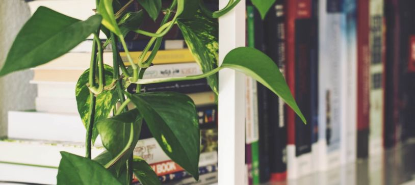 9 Ways You Can Make Your Office Eco-Friendly